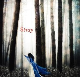 STRAY by Elissa Sussman – A Review